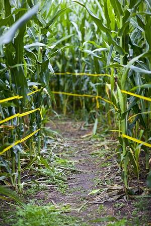 Traditional corn maze path in rural america