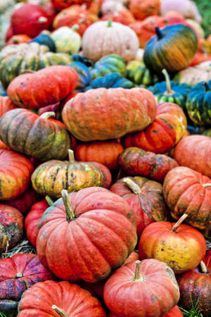 gourds: Pile of mixed sized orange and green pumpkins Stock Photo
