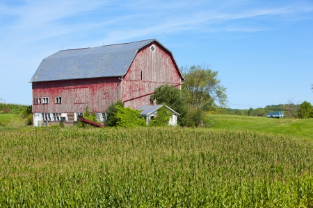 corn fields: American Country Farm With Blue Sky