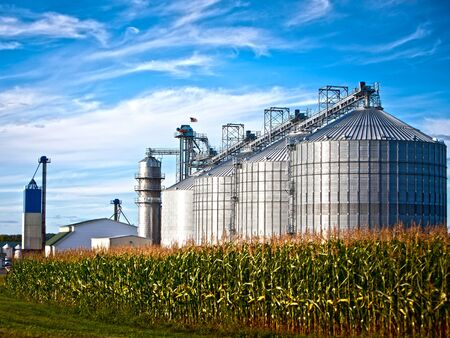 biofuel: Corn dryer silos standing in a field of corn