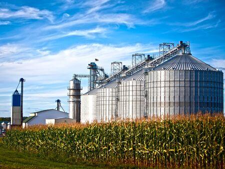 silo: Corn dryer silos standing in a field of corn