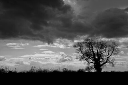 Single tree silhouette against moody clouds photo