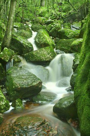 Newland forest after rain