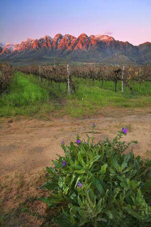 Winyard with overberg backdrop Standard-Bild