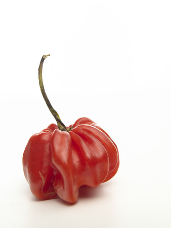 bonnet up: Isolated Scotch Bonnet