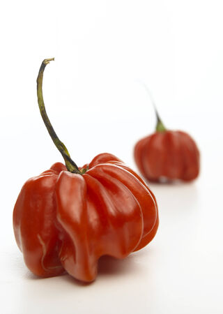 bonnet: Isolated Scotch Bonnet