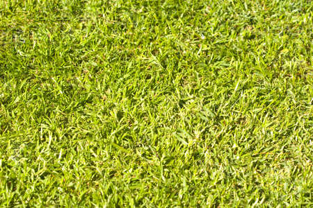 A close up of green grass Stock Photo