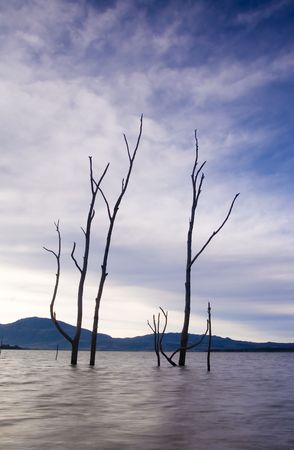 Dead trees in the water photo
