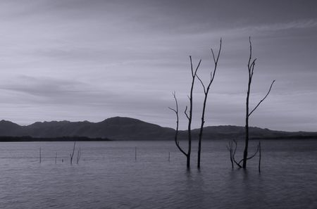 Dead trees in the water