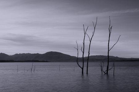 arboles secos: �rboles muertos en el agua