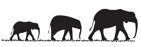 Three elephants of various size in a line