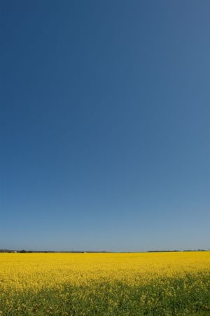 Canola fields in the Western Cape, South Africa Stock Photo - 6572742