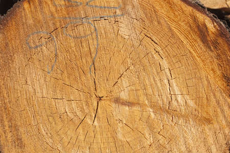 Destruction of forests due to logging