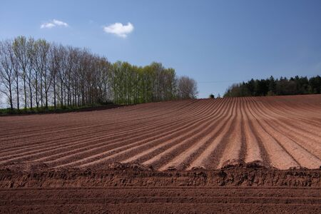 Shrawley, Worcestershire, UK. A wide angle shot of a ploughed, tree-lined field with furrows leading to horizon