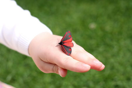 This red and black winged moth is a cinnabar moth. Photograph captured in a garden in Staffordshire, UK in June Banco de Imagens