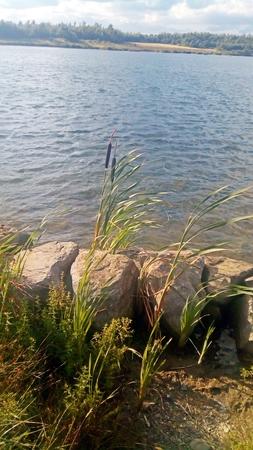 Single Reed Near Water