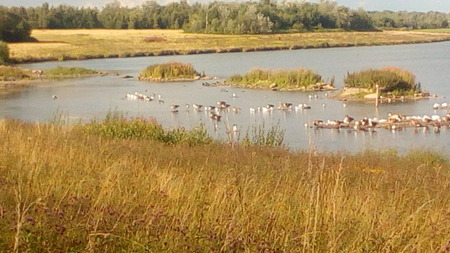 Flock Of Birds On Lake In Distant
