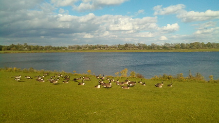 Anglers Country Park Lake with Canadian Geese