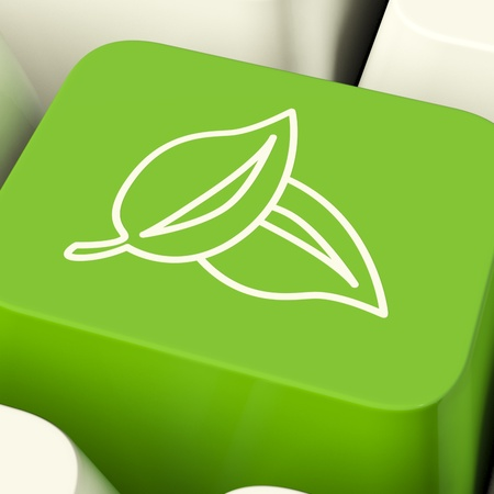 Leaves Icon Computer Key Green Showing Recycling And Eco Friendly photo