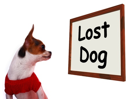 runaway: Lost Dog Sign Shows Missing Or Runaway Puppy
