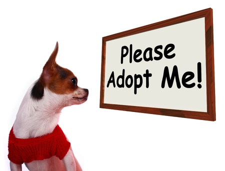 Please Adopt Me Sign Shows Stray Unwanted Canine Stock Photo - 13564358