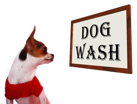 grooming dog: Dog Wash Sign Shows Canine Grooming Washing Or Shampoo