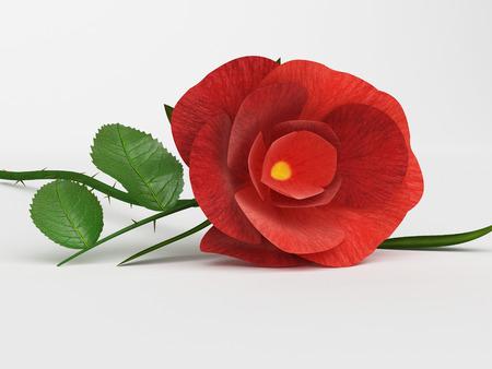 compassionate: Rose Love Indicating Compassionate Romantic And Boyfriend