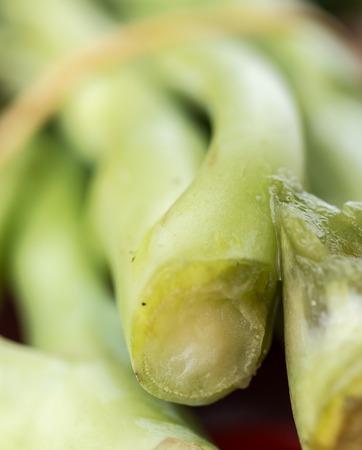 verduras verdes: Verduras Representaci�n Garden Fresh Y Hoja Foto de archivo