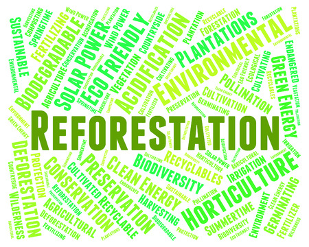 copse: Reforestation Word Representing Woodland Woodlands And Jungle