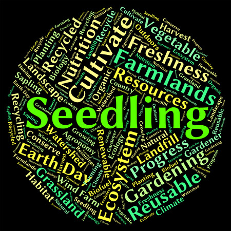young plant: Seedling Word Indicating Young Plant And Botanical Stock Photo