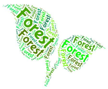 copse: Forest Word Meaning Jungle Copse And Forests Stock Photo