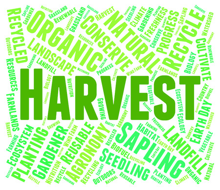 yields: Harvest Word Showing Grain Crops And Grains