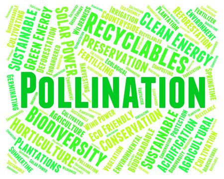 fertilize: Pollination Word Meaning Words Pollinate And Fertilize