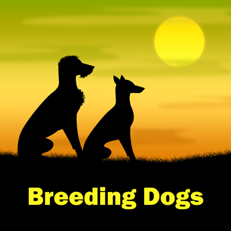 reproducing: Breeding Dogs Indicating Bred Breeds And Reproducing
