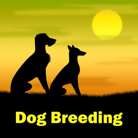canine: Dog Breeding Representing Offspring Canine And Night