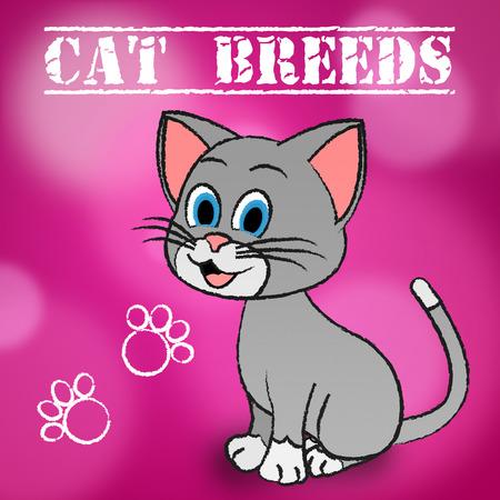 reproduce: Cat Breeds Representing Pets Husbandry And Reproduce