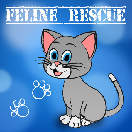 feline: Feline Rescue Indicating Pets Felines And Kitten