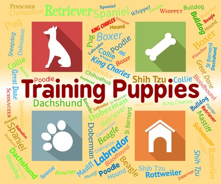Training Puppies Indicating Dogs Pups And Skills Stock Photo