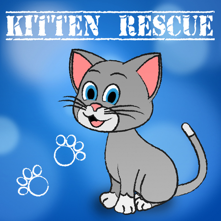 recovering: Kitten Rescue Showing Recovering Pets And Pet Stock Photo