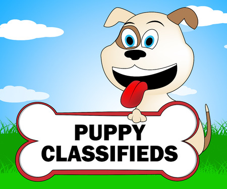 pedigree: Puppy Classifieds Meaning Pedigree Canine And Advert Stock Photo