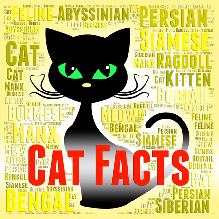 pedigree: Cat Facts Meaning Information Pedigree And Pet Stock Photo