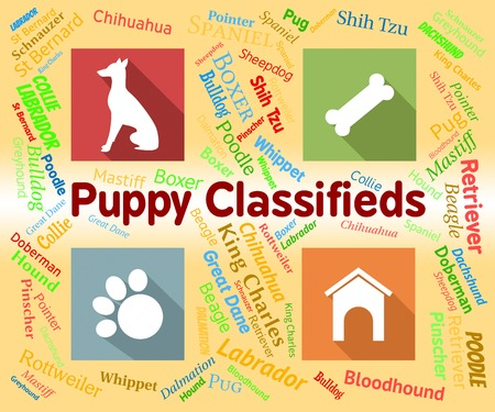 pups: Puppy Classifieds Indicating Doggie Media And Pups