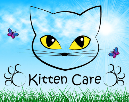 look after: Kitten Care Indicating Look After And Felines