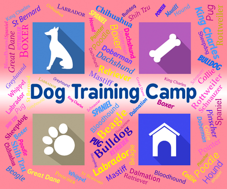 pedigree: Dog Training Camp Meaning Puppy Pedigree And Doggy