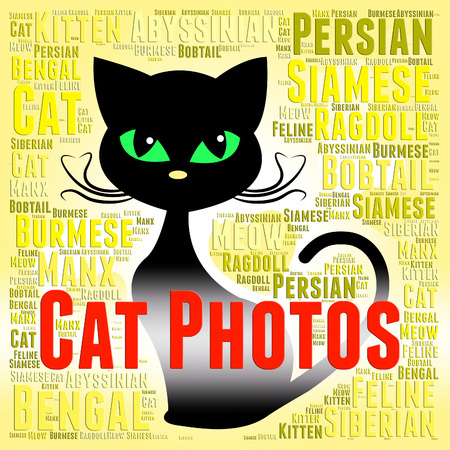 snapshots: Cat Photos Meaning Feline Picture And Snapshots Stock Photo