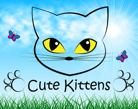 lovable: Cute Kittens Indicating Domestic Cat And Lovable