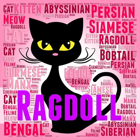 reproducing: Ragdoll Cat Meaning Breeding Mate And Reproducing