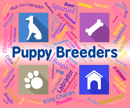 canine: Puppy Breeders Showing Bred Dog And Canine