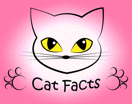 feline: Cat Facts Representing Truth Info And Feline Stock Photo