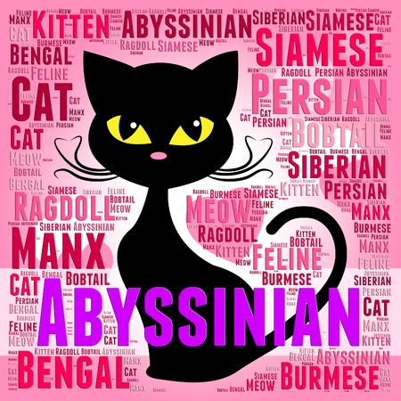 abyssinian cat: Abyssinian Cat Showing Domestic Kitty And Offspring